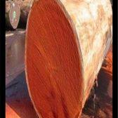 原木材质有哪些品种?怎么识别呢?